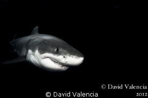 Great Whites in the dark. by David Valencia