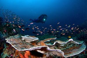 Marine life with diver by Iyad Suleyman
