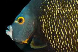 Angel Fish by Spencer Burrows