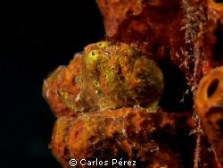 Frog smile by Carlos Pérez