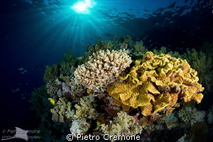 reefscape in dappled light by Pietro Cremone