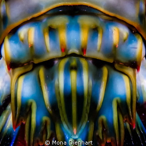 ABSTRACT SHRIMP by Mona Dienhart
