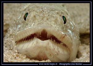 Face to face - night dive with this lezard fish... :O)... by Michel Lonfat