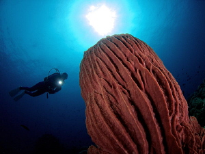 Giant Barrel Sponge & Diver by Iyad Suleyman
