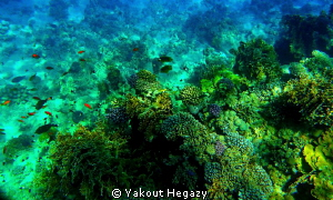 Red sea reef by Yakout Hegazy
