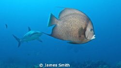 The angel fish is looking thoughtful! by James Smith