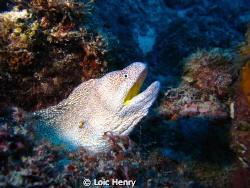 Moray eel Canon G12 by Loic Henry