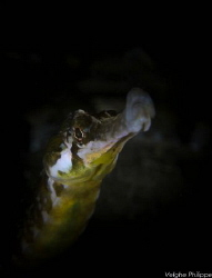 Whistling through life.