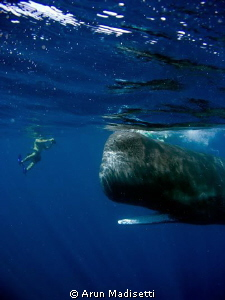 Dylan and the whale. my son meets a whale. back onboard h... by Arun Madisetti