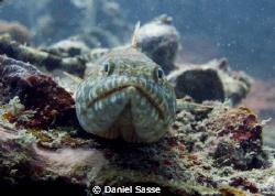 Lizard Fish f/4.4 Exposure Time 1/68 Sec. by Daniel Sasse