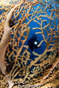 My dive buddy by Gleb Tolstov