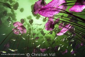 """""""Prosperity"""" by Christian Vizl"""