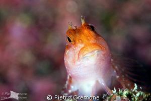Redhead by Pietro Cremone