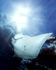 """Manta""