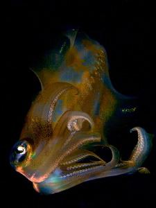 """""""squid"""" by Iyad Suleyman"""