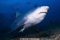 This view makes every diver's heart beat faster ... by Michael Weberberger