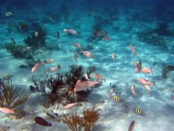 Grand Cayman Island Olympus 5050 with PT-015 housing natu... by Steven Pahel