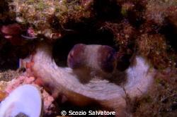 octopus by Scozio Salvatore