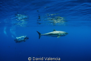 This day we had a sub in the water. Here's a comparison o... by David Valencia