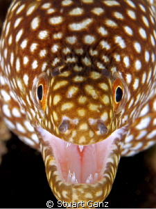 Little Moray just saying hi by Stuart Ganz
