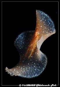 Underwater swimming worm by Ferdinando Meli