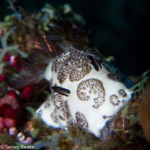 Nice nudi !