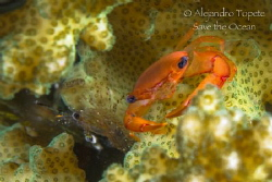 Crab and Shrimp join the house, La Paz Mexico by Alejandro Topete