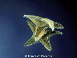Acrobatic star by Francesco Pacienza