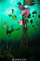 Underwater lily ballroom @ Cenote Car Wash (Aktun Ha) by Jovin Lim