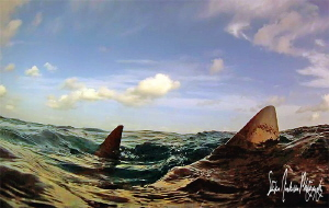Fins up  with Lemon Shark Snaps at Tiger Beach - Bahamas by Steven Anderson