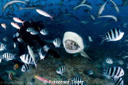 Found myself in the middle of a shark feed with a broken ... by Francesca Truter