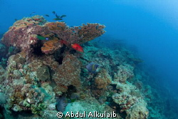 I took this pic in Jana island and this was my first pic ... by Abdul Alkulaib