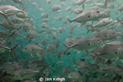 Traffic jam / my last 10 min under Water  before end vaca... by Jan Krogh