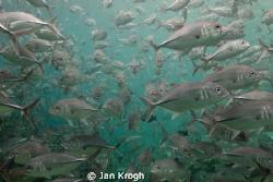 Traffic jam / my last 10 min under Water  before end vaca... by Jan Krogh