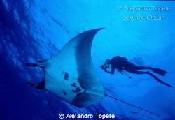 Manta y Buzo, Islas Revillagigedo Mexico Nikonos V, 15 m... by Alejandro Topete