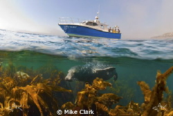Grey Seal under the boat. by Mike Clark