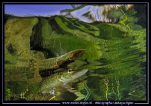 Pike reflection III by Michel Lonfat