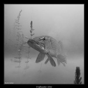 B/W Pike by Beate Seiler