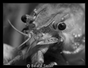 Crayfish 
