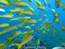 inside a school of fish by Caroline Baille