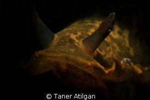 In the dark.. by Taner Atilgan