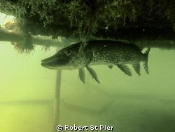 wraysbury dive centre by Robert St Pier