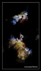 hermit & a mirror...  (S95 + handheld torch & mirror se... by Tim Ho