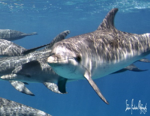 A day of dolphins in the Bahamas was quite a treat as we ... by Steven Anderson