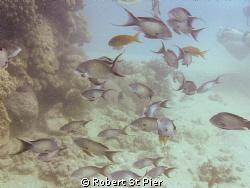 fish under pier by Robert St Pier