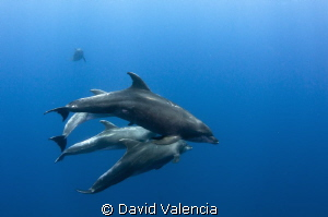 Here are some very friendly bottle nose dolphins. It's a ... by David Valencia