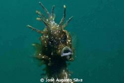 seahorse portrait,NikonD700,105 nikor lens by José Augusto Silva