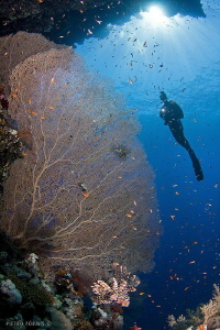 Gorgonia shark obserwatory by Pietro Formis