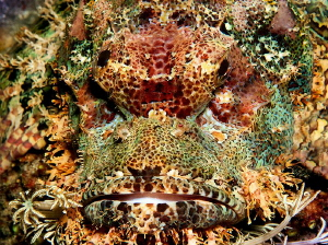 It is similar to a lion, but it is not lion) Puerto Galera by Sergey Lisitsyn