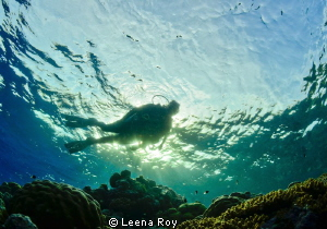 Diver in dappled light by Leena Roy
